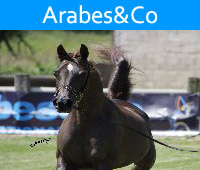 Arabes&Co. International Horse Show for the Pure Arab Breed