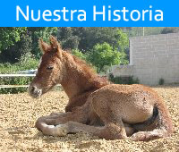 A brief history of La Gerencia Equestrian Center