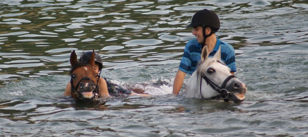 horses swimming in the sea at equine summer camps